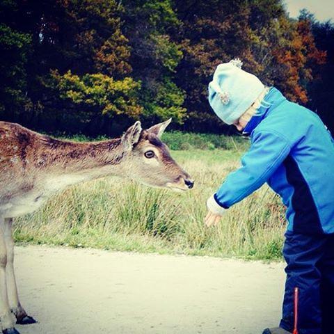 Mensch und Tier begegnen sich  im Wildpark Rheinbllen Infohellip