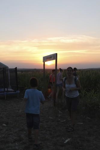 Abendstimmung Maislabyrinth