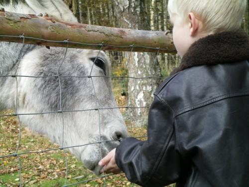Tierpark Rheinböllen Esel