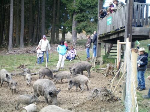 Tierpark Rheinböllen Schweinerei